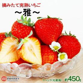 【ふるさと納税】予約受付!<摘みたて完熟いちご 〜雅〜(化粧箱) 約450g> ※2019年11月初旬から12月末迄に順次出荷します。 イチゴ 苺 【冷蔵】