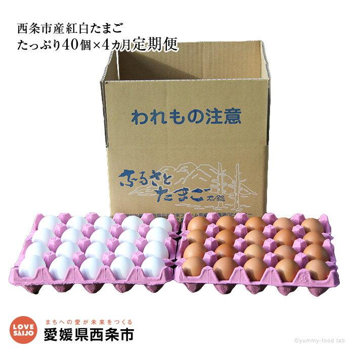 【ふるさと納税】<名水育ち愛媛県西条市産 紅白たまご たっぷり40個×4カ月定期便> ※2か月以内に順次出荷します。(1回目) 卵 玉子 タマゴ 愛媛県 西条市 【冷蔵】
