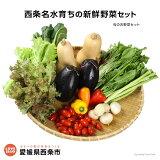 <西条名水育ちの新鮮野菜セット>(旬のお野菜セット)