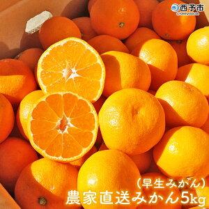 【ふるさと納税】<浅井農園 農家直送みかん5kg(早生みかん)>※2020年11月中旬から12月上旬迄に順次出荷 みかん 果物 フルーツ ミカン オレンジ 特産品 愛媛県 西予市 【常温】