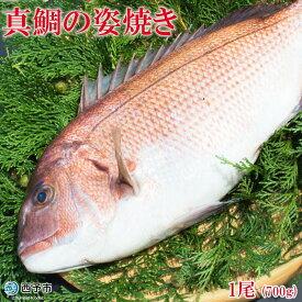 【ふるさと納税】<真鯛の姿焼き 1尾(700g)>※1か月以内に順次出荷 まだい マダイ たい 養殖 特産品 松下海産 魚 愛媛県 西予市 【冷凍】