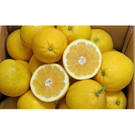 【ふるさと納税】愛南産の河内晩柑10kg 【果物類・柑橘類・フルーツ】 お届け:2020年4月中旬〜8月上旬