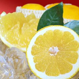 【ふるさと納税】愛南ゴールド(愛南産の河内晩柑)8kg 【果物類・みかん・柑橘類・約25個入り・くだもの・フルーツ】 お届け:2019年6月17日〜2019年8月下旬