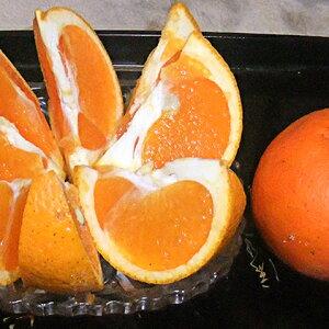 【ふるさと納税】【数量限定】愛南産 ブラッドオレンジ(タロッコ)5kg 【果物類・柑橘類・オレンジ・フルーツ】 お届け:2020年4月1日〜4月30日
