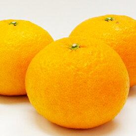 【ふるさと納税】愛南育ち 吉田農園 甘夏 約5kg 【果物類・柑橘類・フルーツ】 お届け:2021年3月中旬〜2021年5月下旬