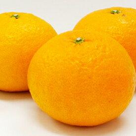 【ふるさと納税】愛南育ち 吉田農園 甘夏 約10kg 【果物類・柑橘類・フルーツ】 お届け:2021年3月中旬〜2021年5月下旬