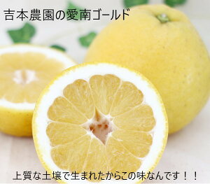 【ふるさと納税】【贈答用】吉本農園の愛南ゴールド(河内晩柑)5kg【果物類・柑橘類・フルーツ】お届け:4月15日〜8月15日