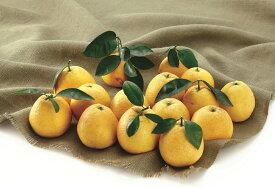 【ふるさと納税】【訳あり】みかん職人の河内晩柑10kg+1kg【果物類・柑橘類・フルーツ】 お届け:4月1日〜10月10日