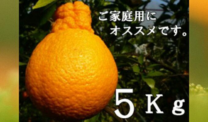 【ふるさと納税】RK−15不知火(デコポン)【5kg】※訳あり商品
