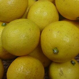 【ふるさと納税】RK048【訳あり】室戸小夏1.8kg<柑橘 訳アリ フルーツ 訳あり 果物 訳あり 送料無料>