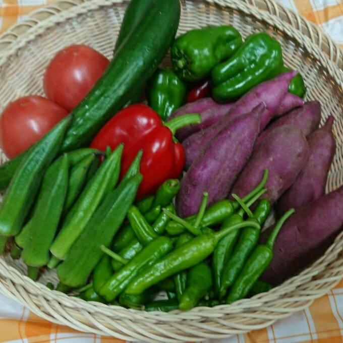 【ふるさと納税】RK−62野菜7種のミニセット(ポン酢のおまけ付)
