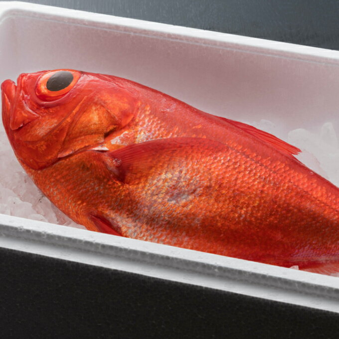 【ふるさと納税】NK−01まるごと1匹!金目鯛