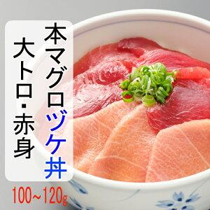 【ふるさと納税】初音の本マグロ(赤身・大トロ)漬け丼<HN125>