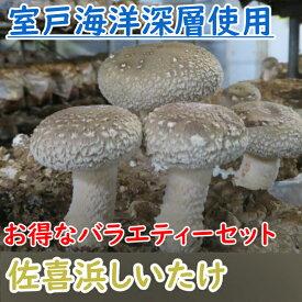 【ふるさと納税】NC003佐喜浜しいたけ(バラエティーセット)