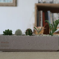【ふるさと納税】サボテン・多肉植物の小苗アソートセットA観葉植物インテリア雑貨鉢セット<SH001>