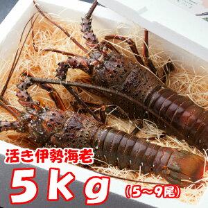 【ふるさと納税】YJ042活伊勢海老【5kg】