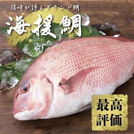 【ふるさと納税】最高峰評価のブランド鯛!「海援鯛」1匹フィーレセット マダイ 鯛 タイ 魚 魚介類 醤油 セット つま 大葉 刺身 高級魚 すぐに食べれる