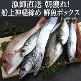 【ふるさと納税】 お楽しみ! 鮮魚詰め合わせ 旬の厳選! 獲れたその場で神経締めしているので鮮度抜群! 送料無料