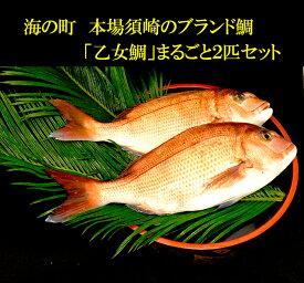【ふるさと納税】「乙女鯛」丸ごと2匹