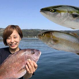 【ふるさと納税】小島水産の安心・安全・とっても新鮮なお魚 年3回定期便Aコース 鯛(タイ) 鰤(ブリ) 鯛のタタキ 産地直送 送料無料
