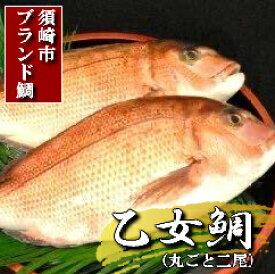 【ふるさと納税】鯛(たい)「乙女鯛」丸ごと2匹
