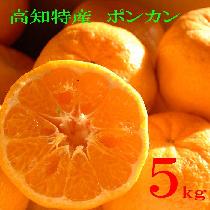 【ふるさと納税】大人気【早期予約中】浦ノ内ポンカン5kg 平成30年度収穫分