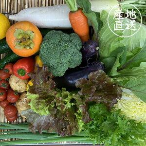 【ふるさと納税】【限定50セット】6ヶ月定期便 無農薬お野菜セット(13〜14品前後)