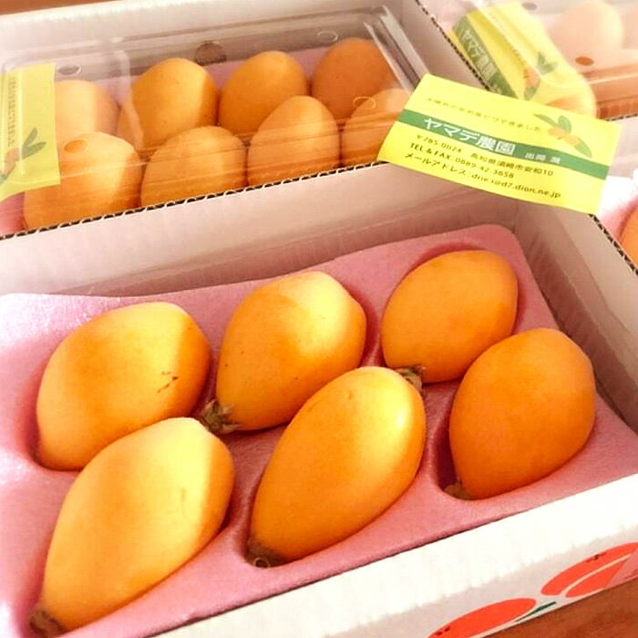 【ふるさと納税】ヤマデ農園 びわ4パック 平成31年度収穫分