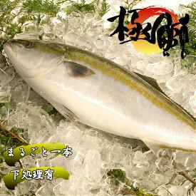 【ふるさと納税】魚 鰤(ぶり) ブランド「極み鰤(ブリ)5kg(下処理)」お正月にも! 産地直送 送料無料