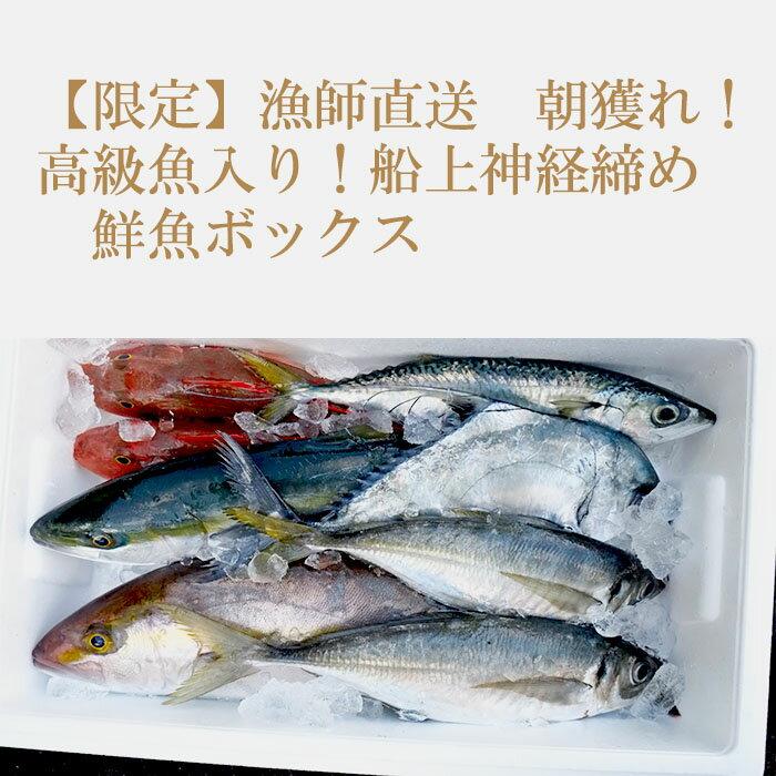 【ふるさと納税】【限定】漁師直送 朝獲れ!高級魚入り!船上神経締め 鮮魚ボックス