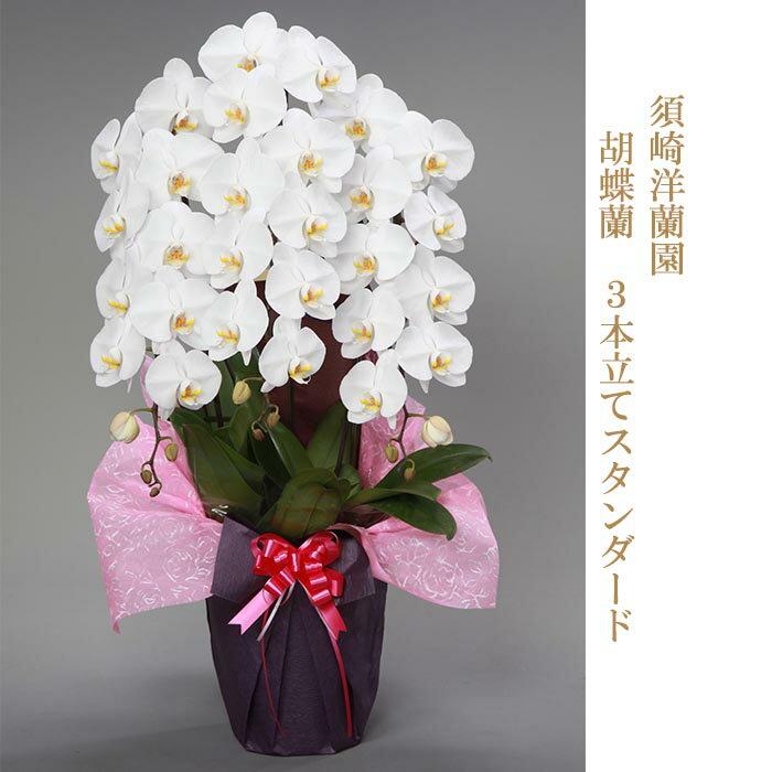 【ふるさと納税】須崎洋蘭園 胡蝶蘭 3本立てスタンダード