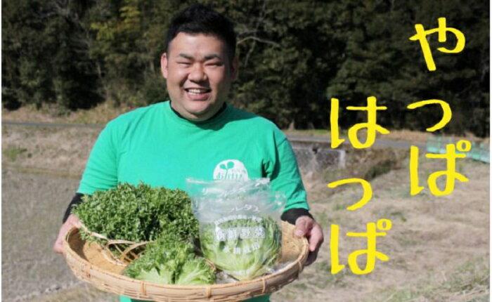 【ふるさと納税】[A-060002]おかけんふぁーむのリーフレタス(栽培期間中農薬不使用)
