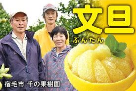 【ふるさと納税】甘さと酸味のバランスにこだわり!千の果樹園の文旦(家庭用5kg)