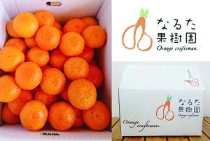 【ふるさと納税】成田果樹園の温州みかん 5kg