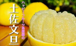 【ふるさと納税】ハッピーフルーツ果樹園の土佐文旦(家庭用)5kg