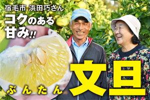 【ふるさと納税】浜田巧の土佐文旦10kg家庭用
