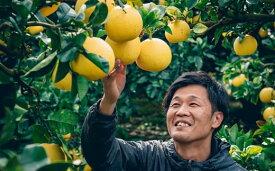 【ふるさと納税】松岡農園の土佐文旦【家庭用】10kg(L〜4L約14〜28個前後)