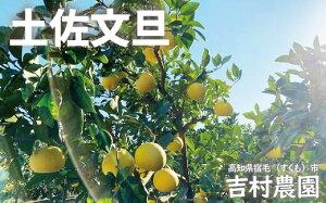 【ふるさと納税】吉村農園の土佐文旦中玉5kg(贈答用)