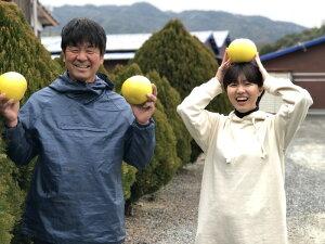【ふるさと納税】彩り柑橘園の土佐文旦贈答用10kg