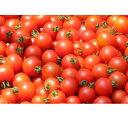 【ふるさと納税】【A-27】「贈答用」峯本・農園のミディトマト