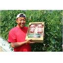 【ふるさと納税】【A-28】「家庭用」峯本・農園のミディトマトときゅうりセット