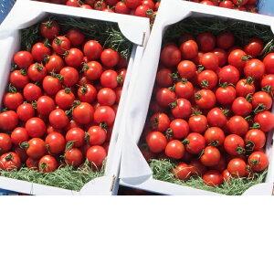 【ふるさと納税】【BB-1】上野さん家のフルティカトマト(2kg×2箱)