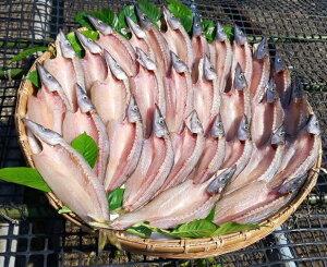 【ふるさと納税】【B-118】岡本水産加工のカマスの干物(B)