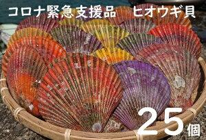 【ふるさと納税】コロナ緊急支援品:ヒオウギ貝(ホタテの仲間)25個入り【B-138】