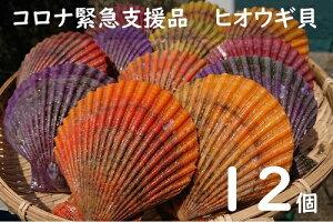 【ふるさと納税】コロナ緊急支援品:ヒオウギ貝(ホタテの仲間)12個入り【A-124】