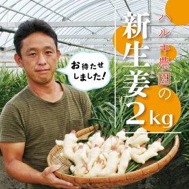 【ふるさと納税】21-833.初夏だけの旬の味わい!ハルキ農園の新生姜2kg【期間限定】