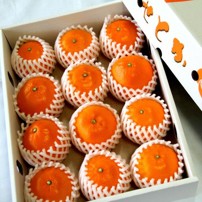 【ふるさと納税】〈2月10日〜3月20日配送〉とろっとジューシー柑橘の女王 せとか3kg