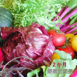 【ふるさと納税】野菜【12カ月】定期便 香南市のお野菜詰め合わせコース【送料無料】12回 毎月 配達 旬 野菜 T-19
