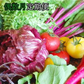 【ふるさと納税】野菜【偶数月】定期便 香南市のお野菜詰め合わせコース【送料無料】6回 配達 旬 野菜 M-10
