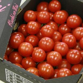 【ふるさと納税】フルーツトマト 完熟 糖度8以上高糖度&高機能性 フルーツトマト1kg送料無料 数量限定 ギフト